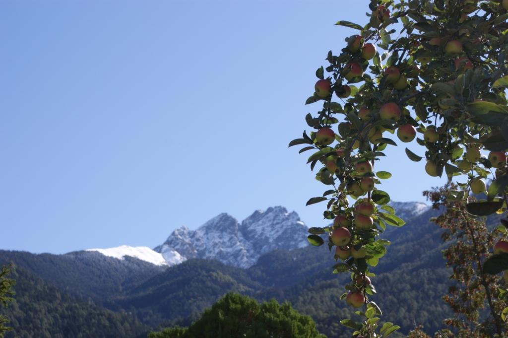 Unser Kalterer Apfel Baum mit dem weißem Ifinger