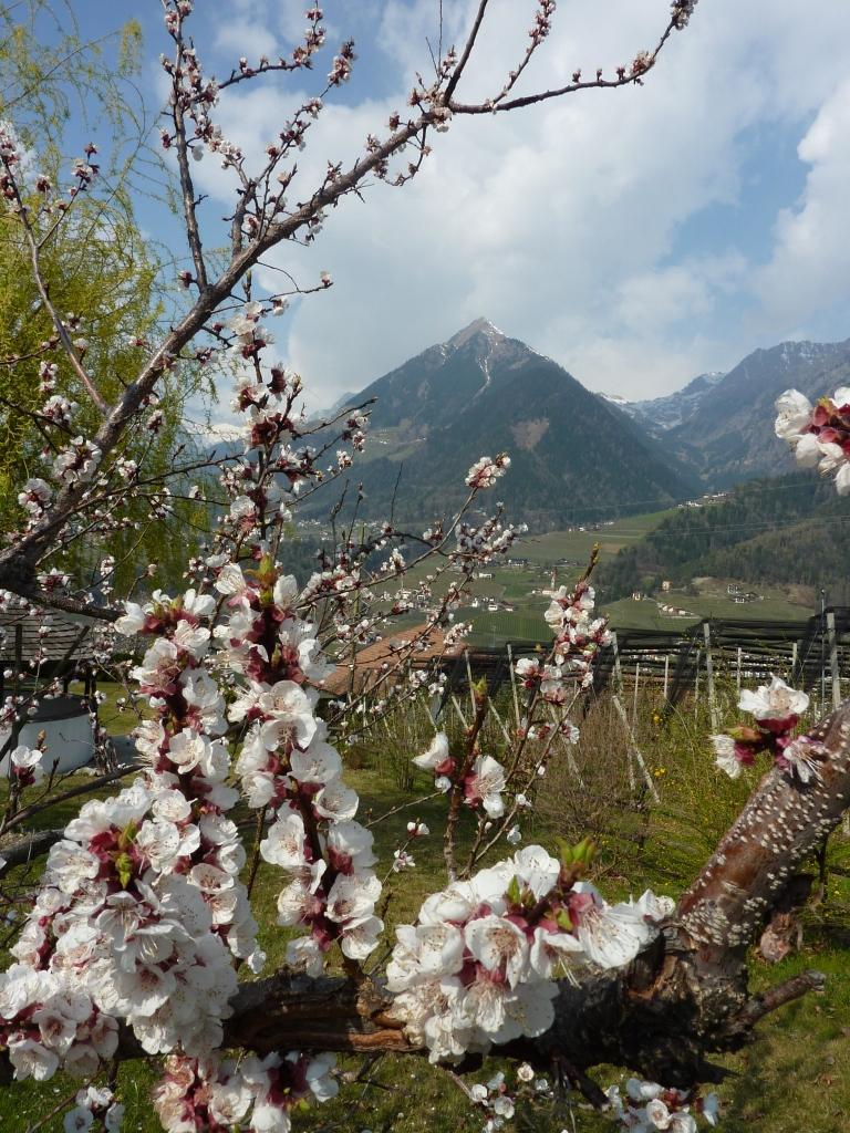 Wir sind wieder für Sie! Der Frühling zeigt sich von seiner schönsten Seite!