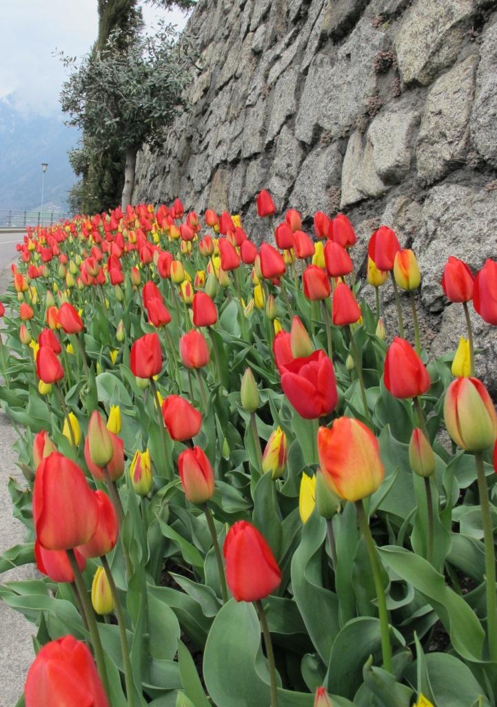 Frühling hält Einzug!
