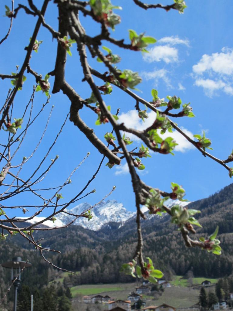 Die Apfelblüte naht! Frühlingszeit in Schenna